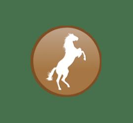 Pferd Format 20 x 20 cm