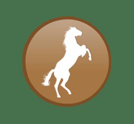 Pferd Format 60 x 60 cm